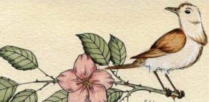 Con chim sơn ca