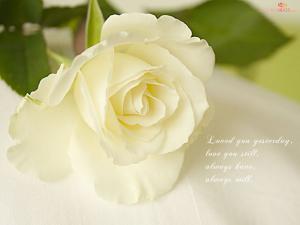 Sự tích hoa hồng bạch