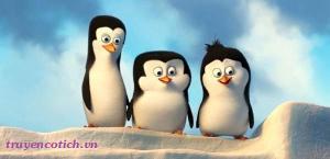 Sự tích chim cánh cụt