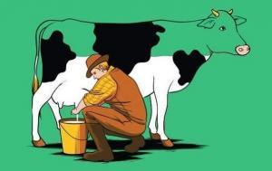 Bài học thức tỉnh con người từ một con bò