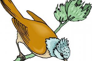 Sự tích chim Ða Đa